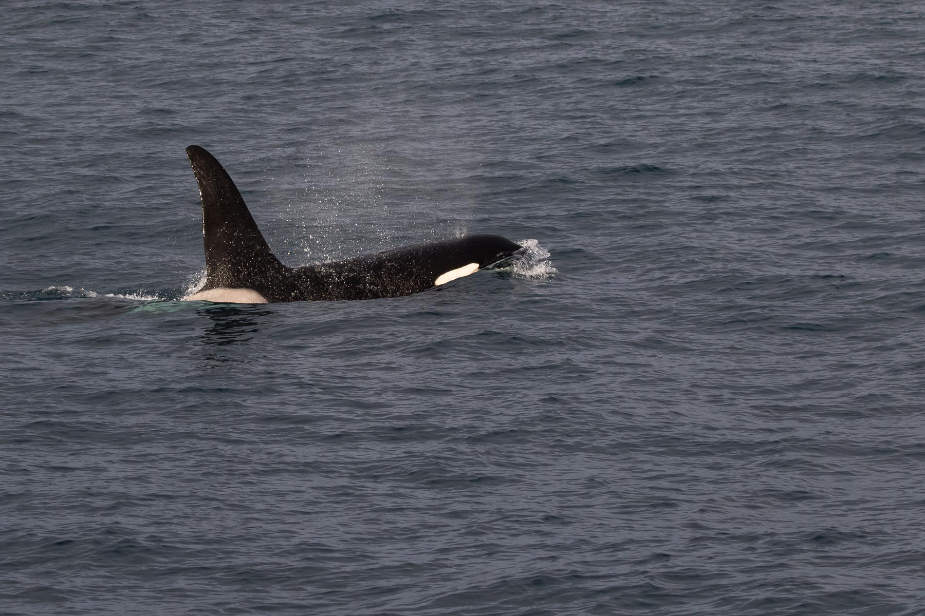 orca2-2223