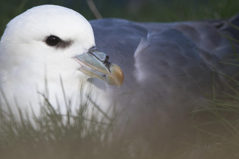 eissturmvogel-1429