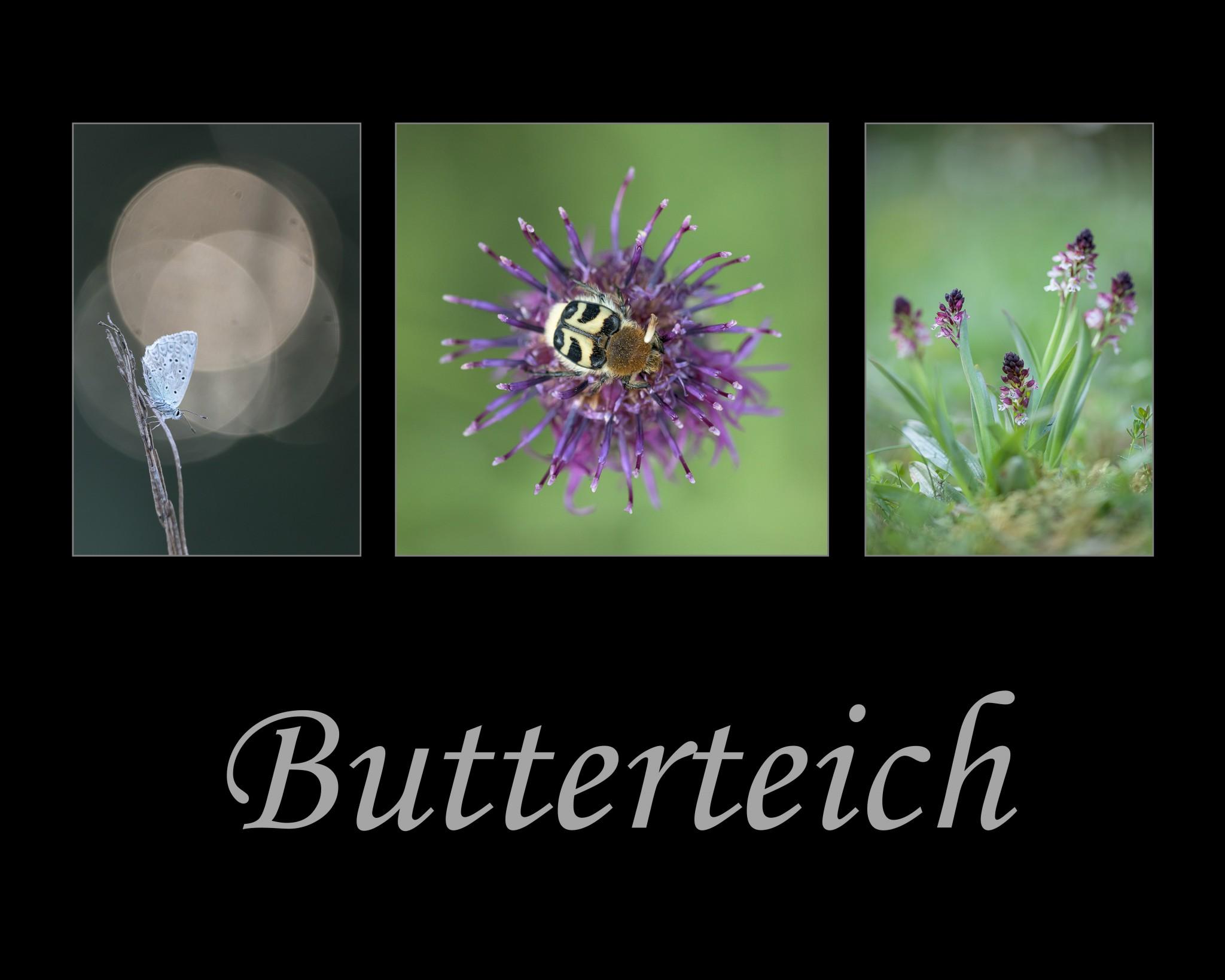 Butterteich1