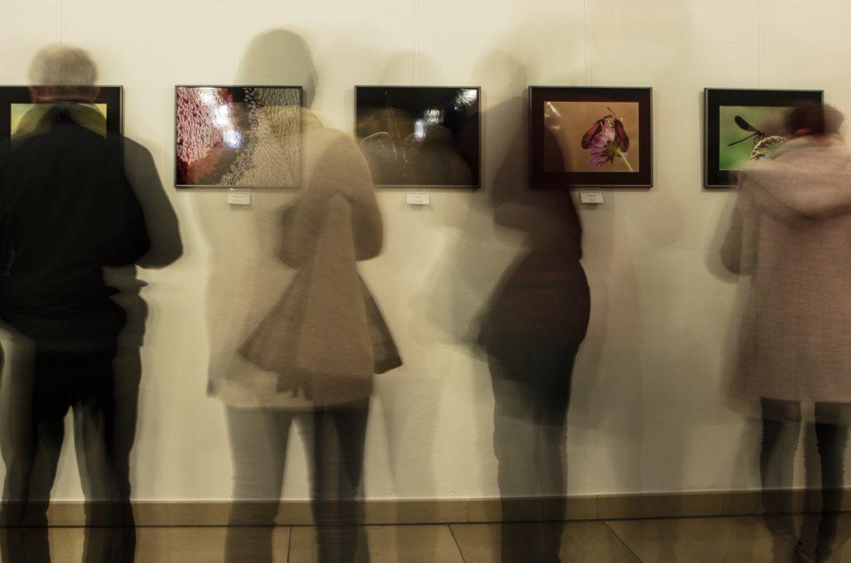 NATUR PUR - Ausstellung in Amberg Februar 2018